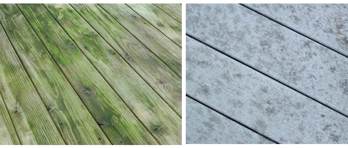 Mold Can Occur On Almost Any Material Including Wood Decking And Unced Composite